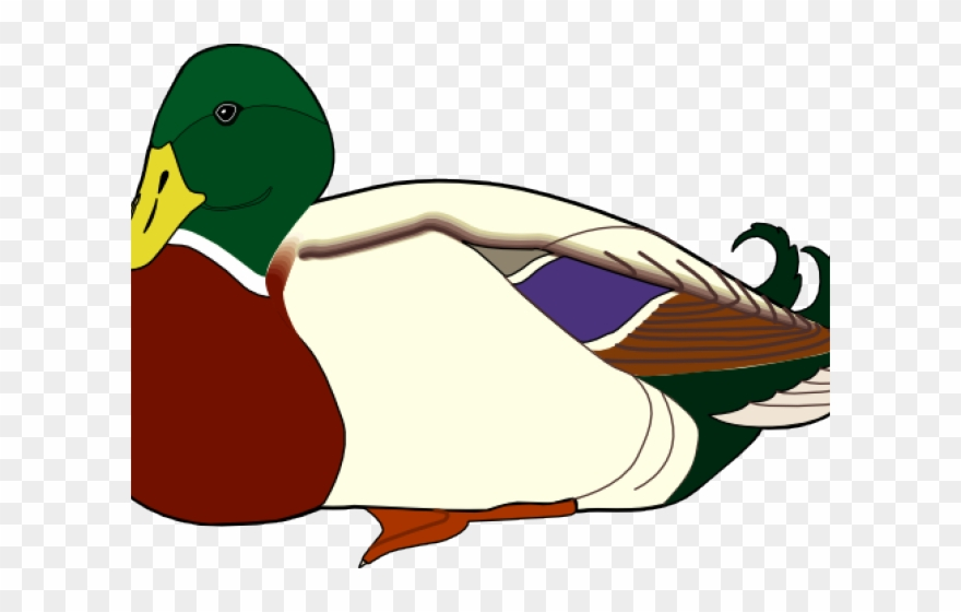 Ducks clipart mandarin duck. Nurse farm png