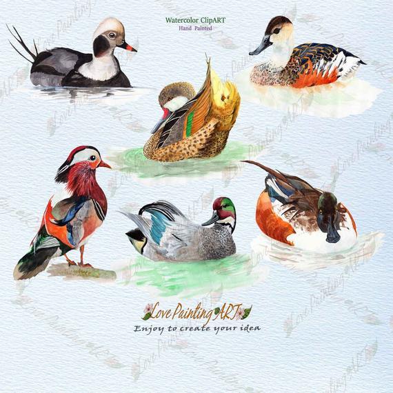 Ducks clipart painting. Duck watercolor ducky art