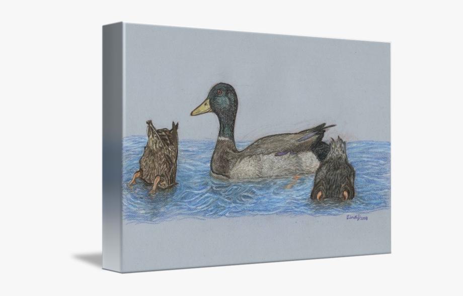 Ducks clipart pond drawing. Mallard duck free cliparts