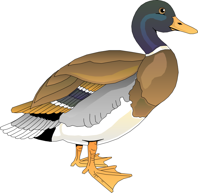 Realistic duck free collection. Ducks clipart simple