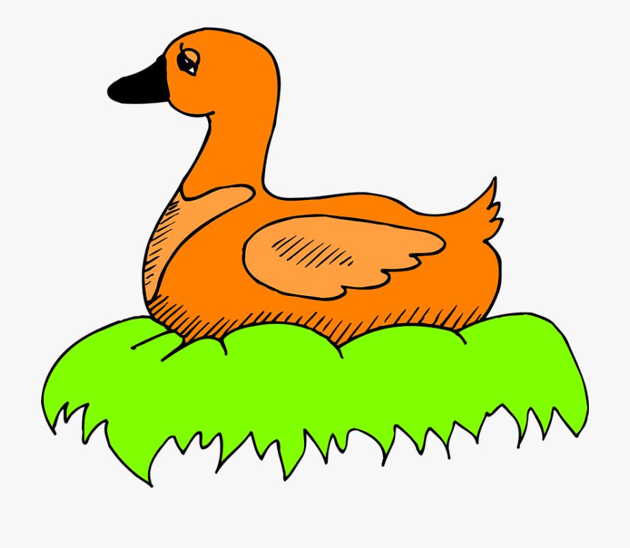 Ducks clipart sitting duck. Green orange bird nest