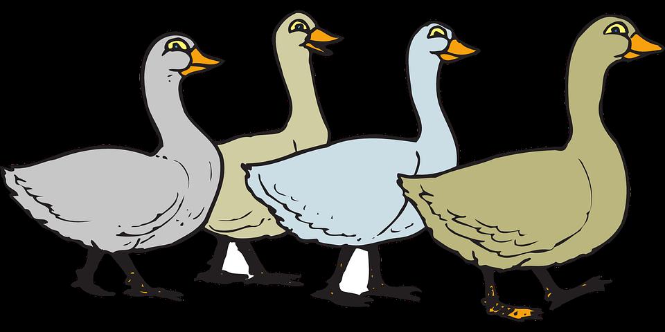 Goose free download best. Ducks clipart vector