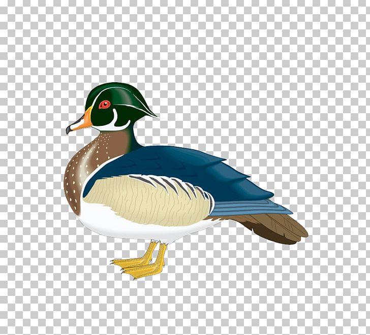 Ducks clipart wood duck. Mallard png animals beak
