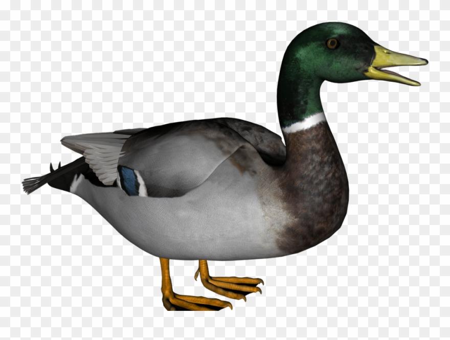 Clip art transparent png. Ducks clipart wood duck