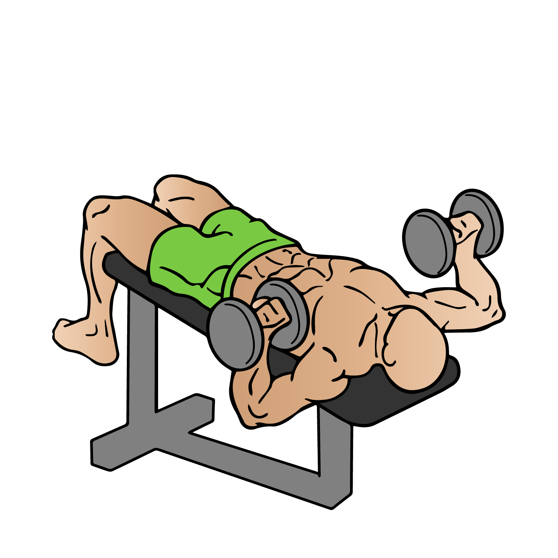 Dumbbell clipart muscular strength exercise. Fitbox blog week breakdown