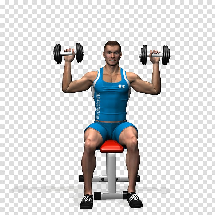 Training overhead press physical. Dumbbell clipart weight lifting