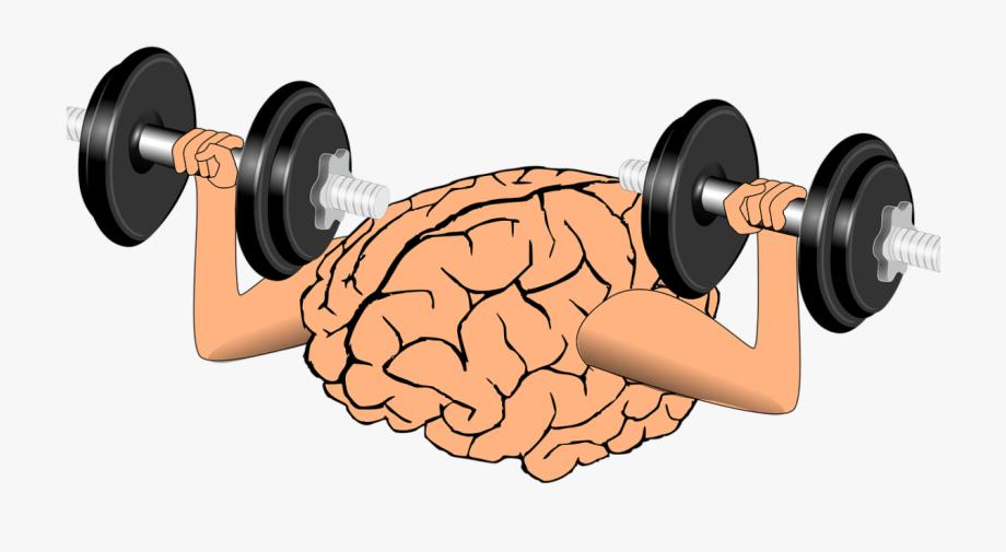 Dumbbell . Dumbbells clipart fitness program