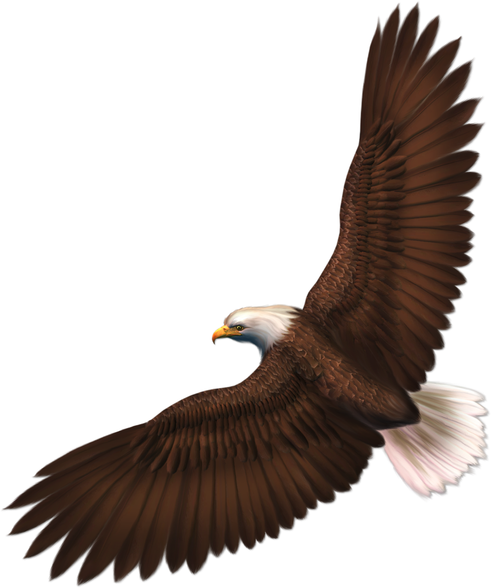 Format png image with. Eagle clipart abstract
