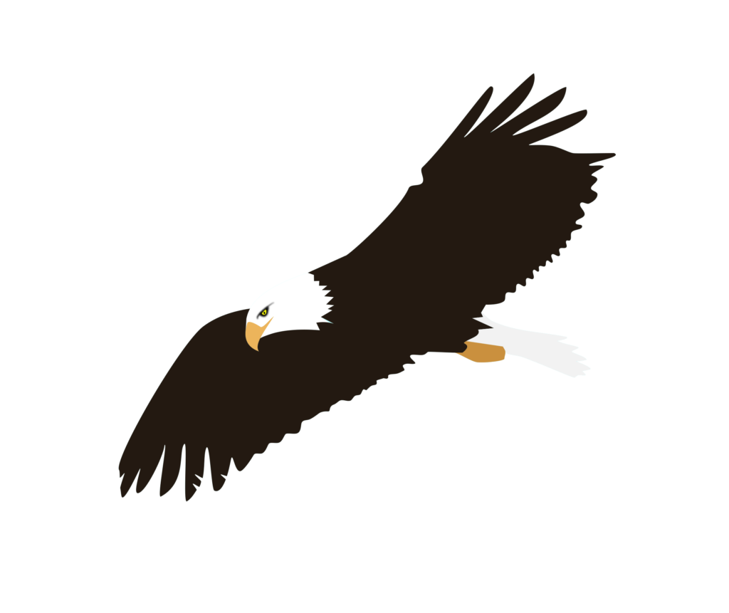 Eagle clipart abstract. Soaring png image peoplepng
