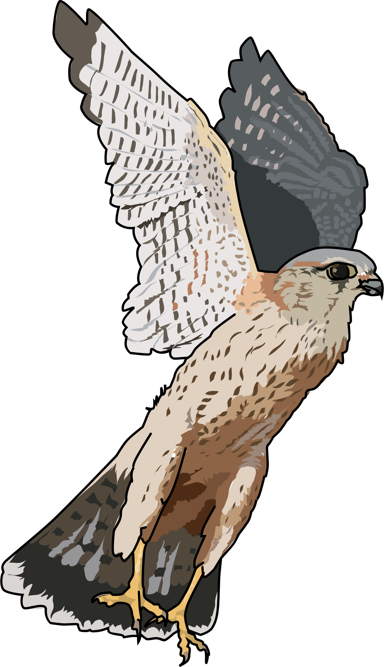 Flying free on dumielauxepices. Muscle clipart falcon