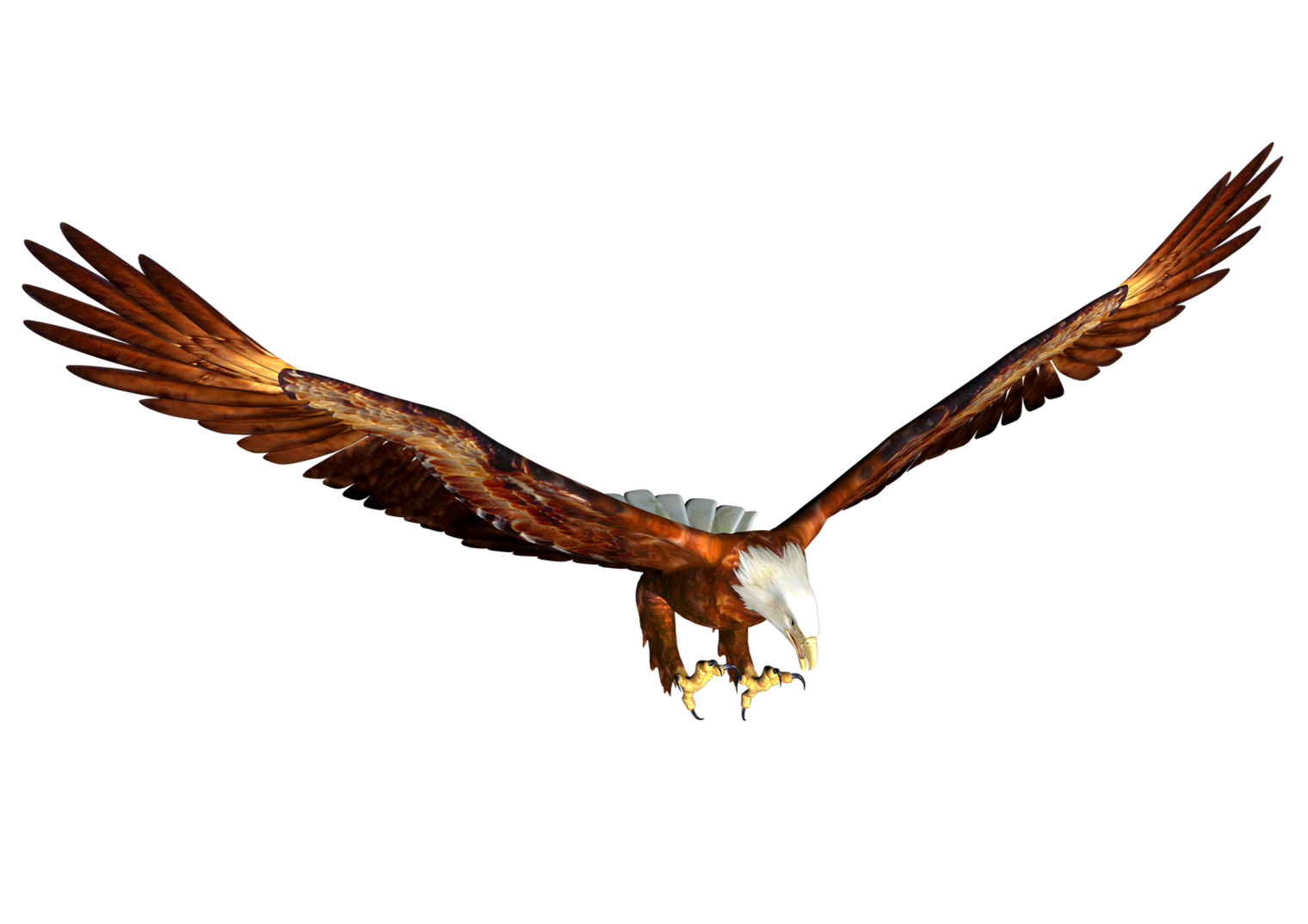 Eagle clipart baby eagle. Flying at getdrawings com