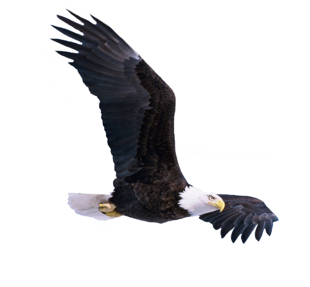 Png transparent images all. Nest clipart eagle nest