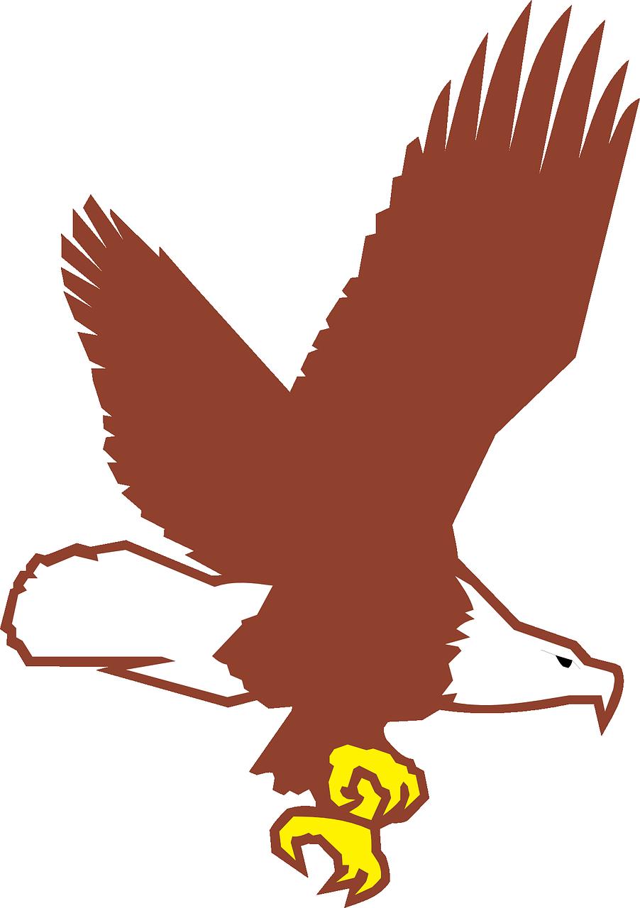Bird flying wings bald. Eagle clipart body