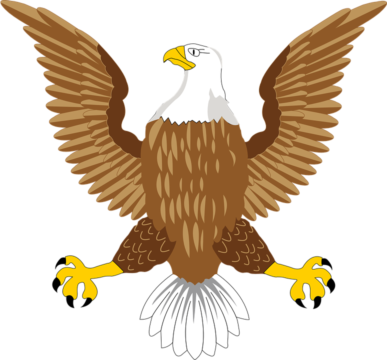 Bald png transparent free. Eagle clipart bold eagle