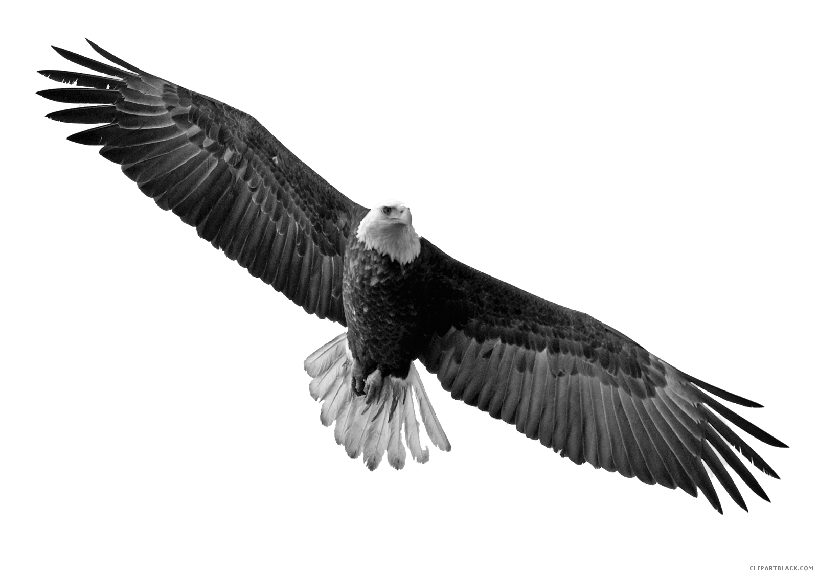 Soaring animal free black. Eagle clipart dead