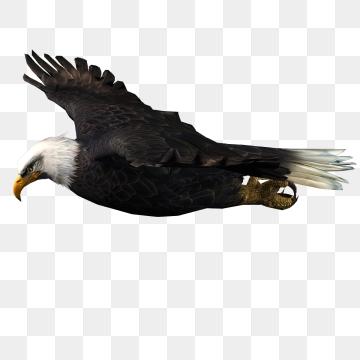 Eagle clipart dead. Png images download resources