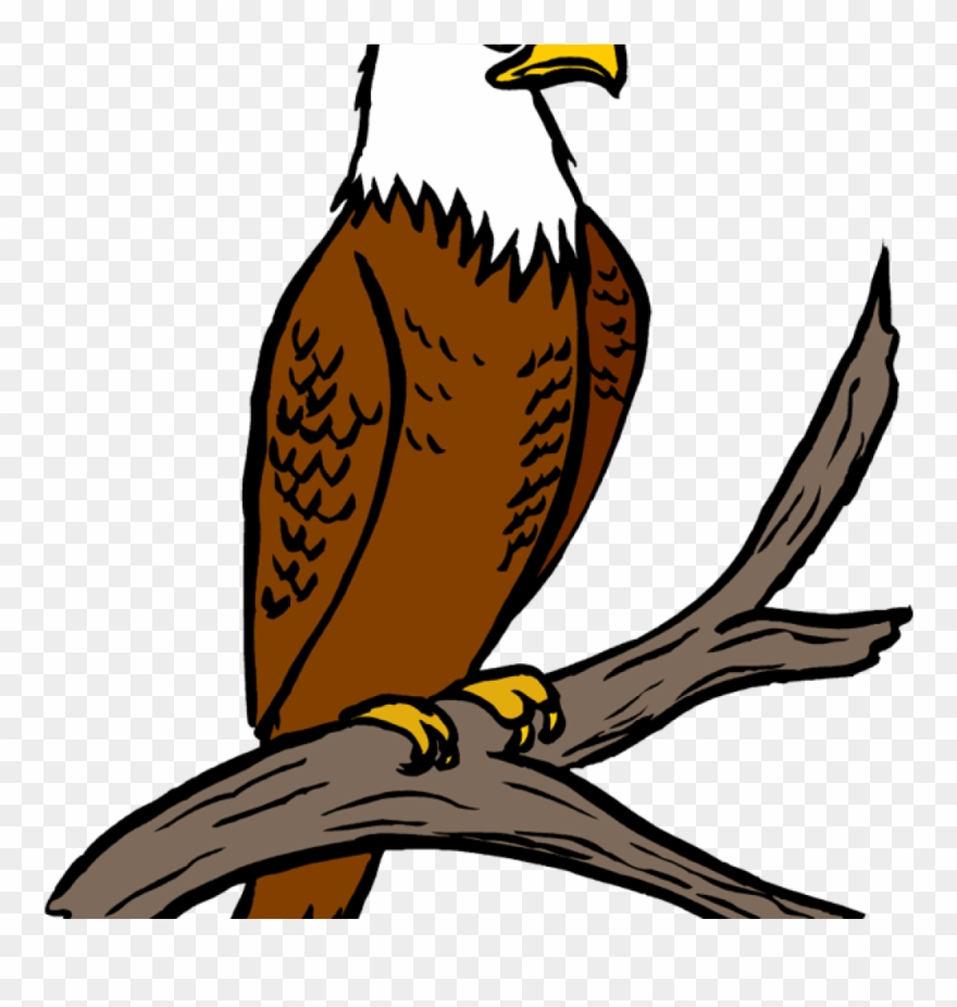 Free feather at getdrawings. Eagle clipart easy