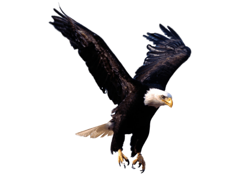 Png free images toppng. Eagle clipart file