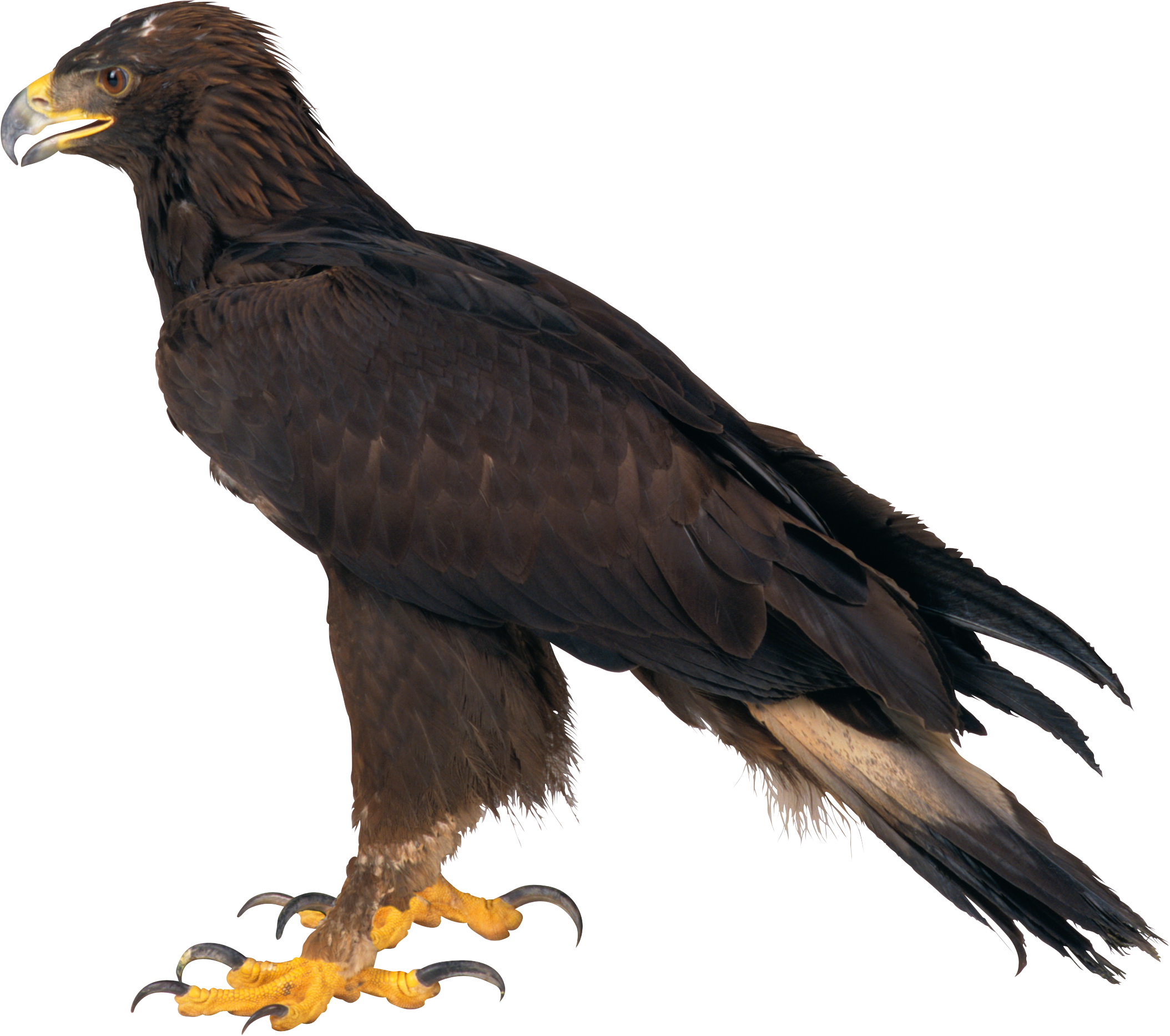 Icon png web icons. Eagle clipart file
