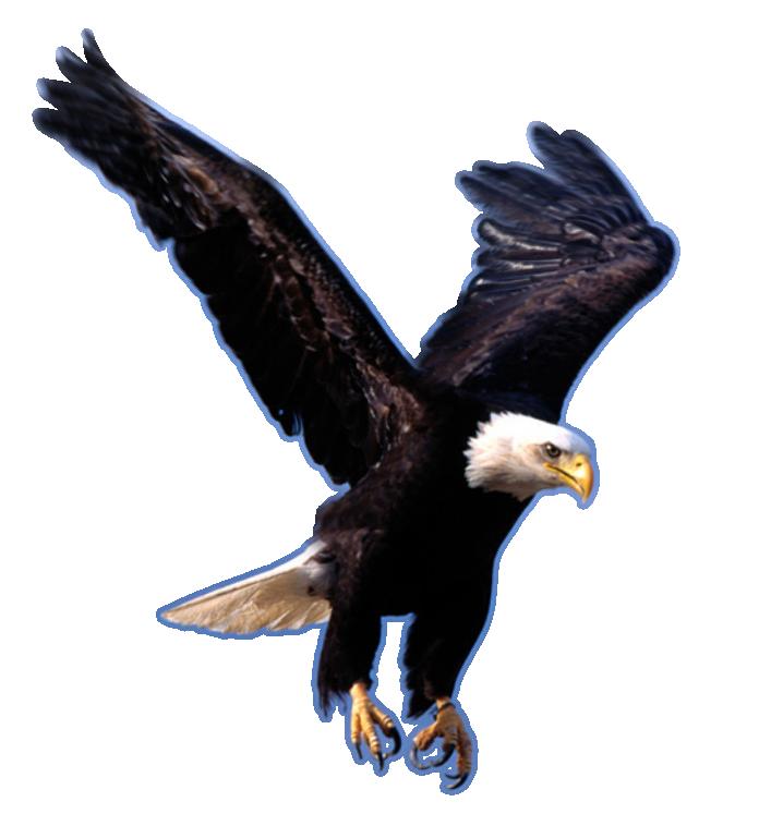 Twelve isolated stock photo. Eagles clipart easy