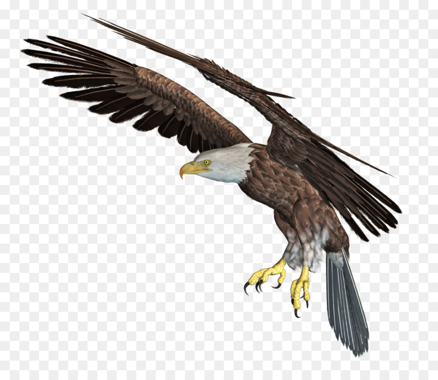 Cartoon eagle wing transparent. Eagles clipart bird african
