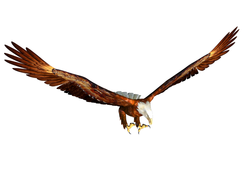 Eagles clipart easy. Free cartoon eagle pictures