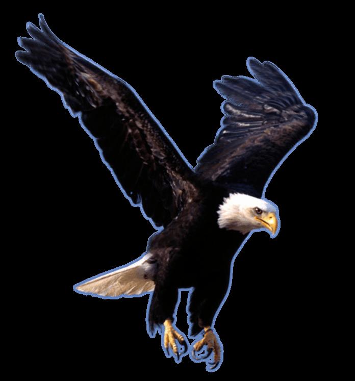 Eagles clipart eagle head. Landing transparent png stickpng