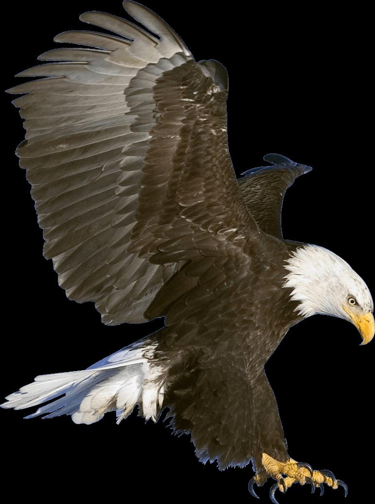Claws transparent png stickpng. Eagles clipart eagle head