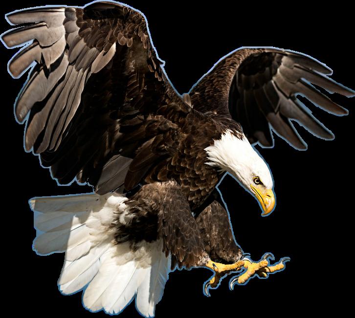 Sticker by taliafera . Eagle clipart majestic
