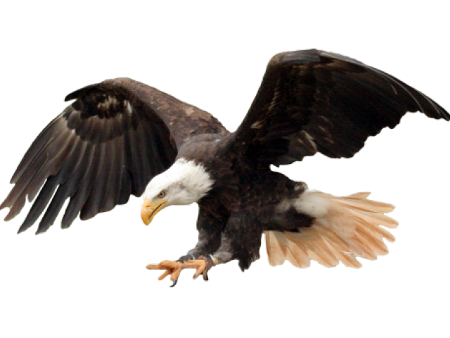 Eagle clipart majestic. Mascot images free download
