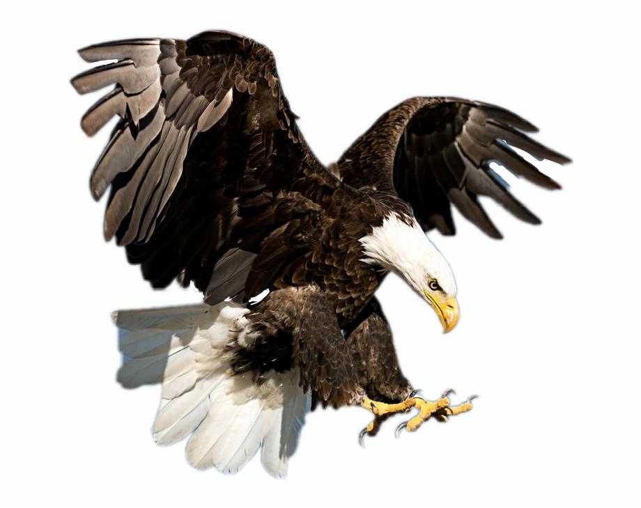 Sticker picsart transparent . Eagle clipart majestic