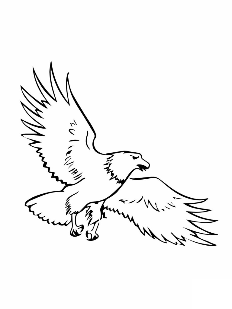 Free cliparts download clip. Eagle clipart outline