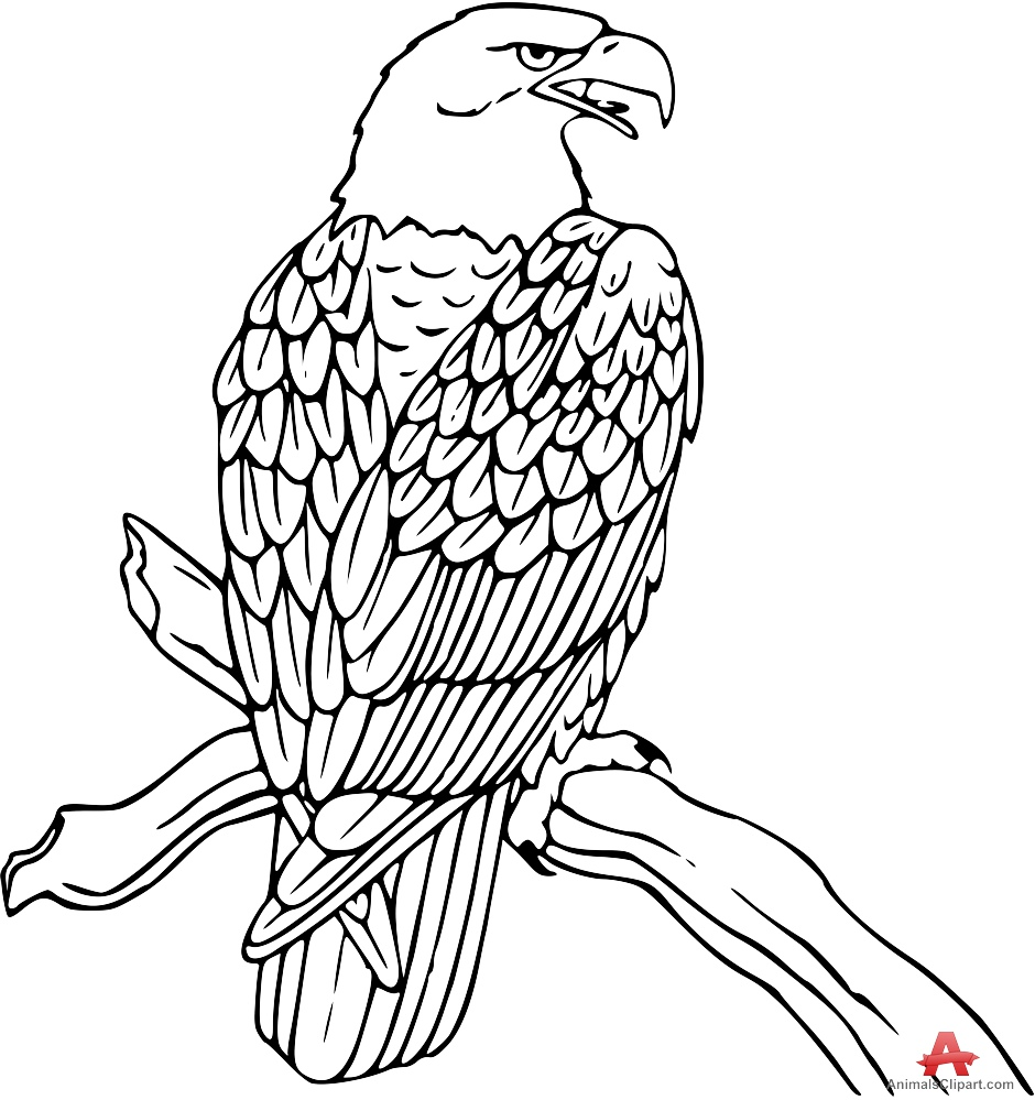 Eagle clipart outline. Free cliparts download clip
