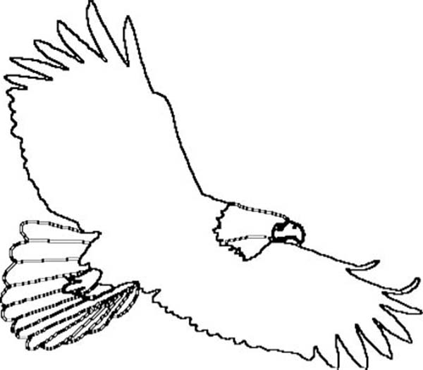 Eagle clipart outline. Free of download clip