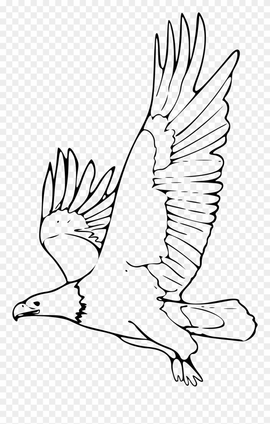 Bald picture of png. Eagle clipart outline