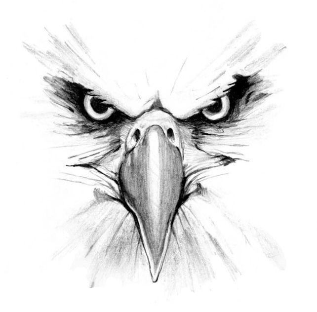 Eagle clipart pencil. Free eagles cliparts download
