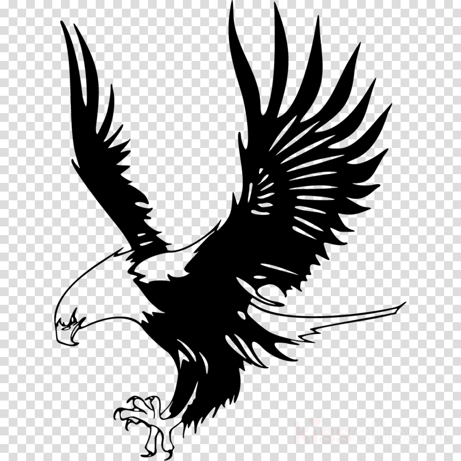 Eagle clipart printable. For to free images