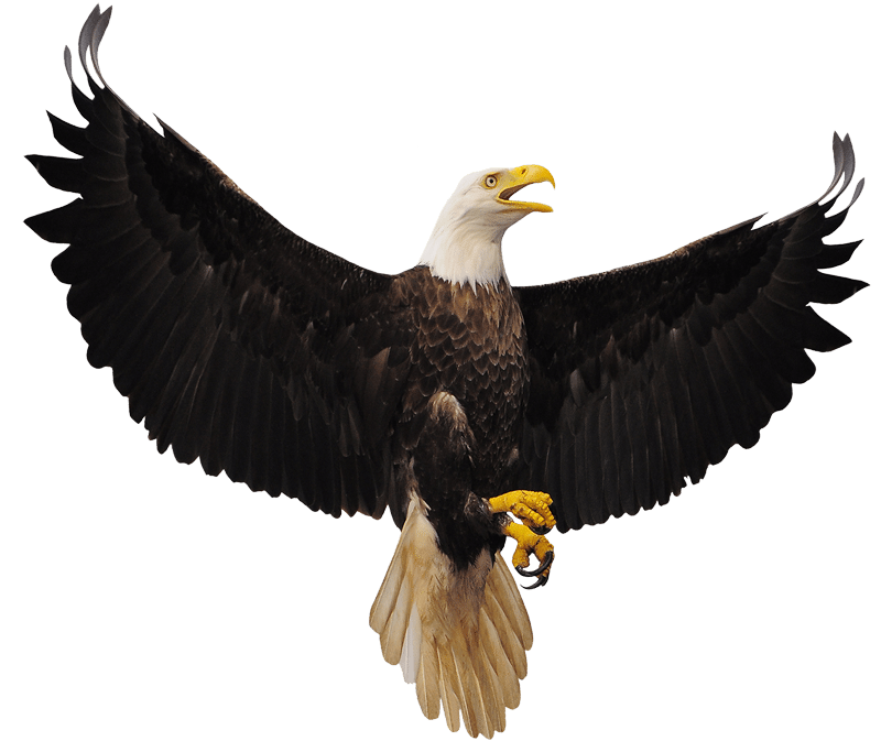 Roost count ferry bluff. Eagle clipart track