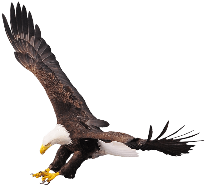 Eagle clipart track. Roost count ferry bluff