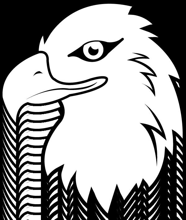 White tailed head pencil. Eagle clipart vector