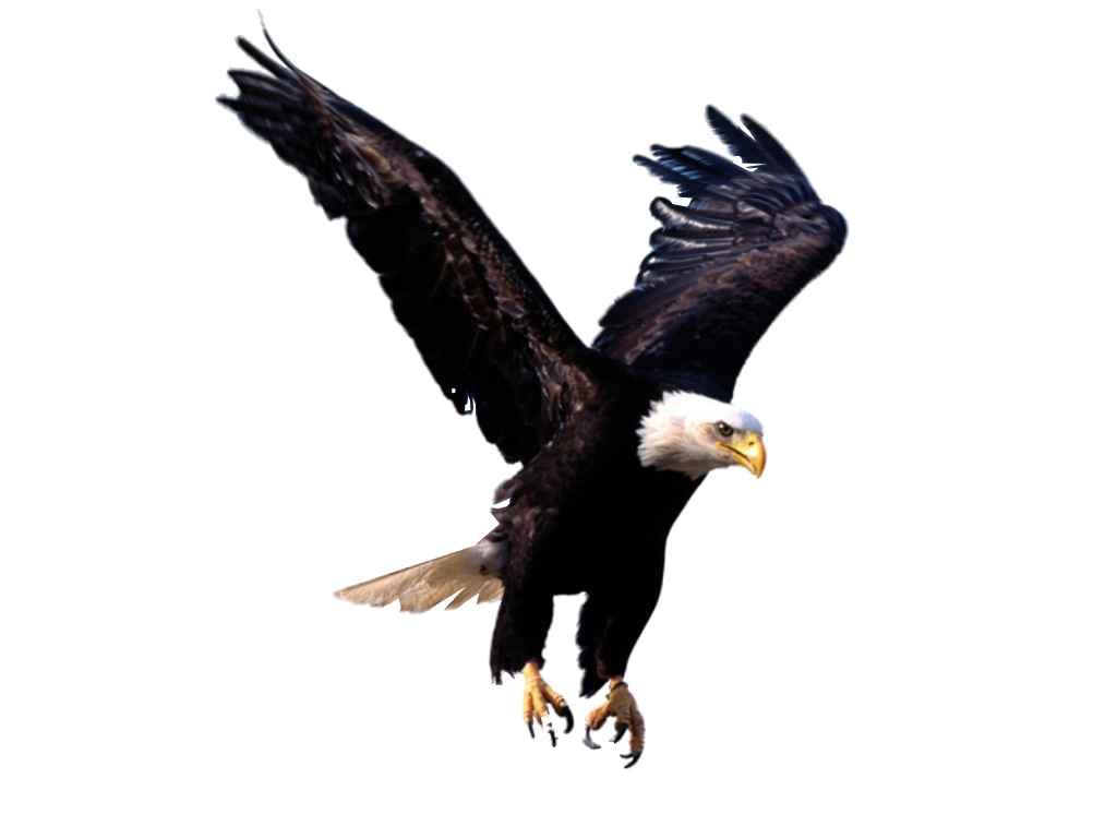 units of images. Eagle clipart wedge tailed eagle
