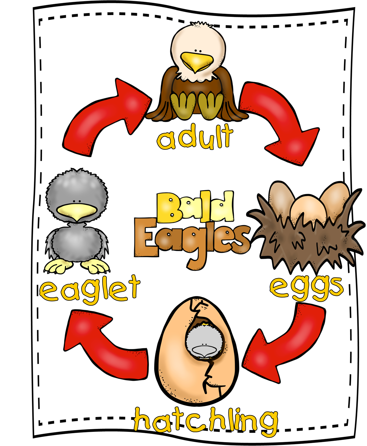 Wow clipart positive learning. Eagle life cycle mini