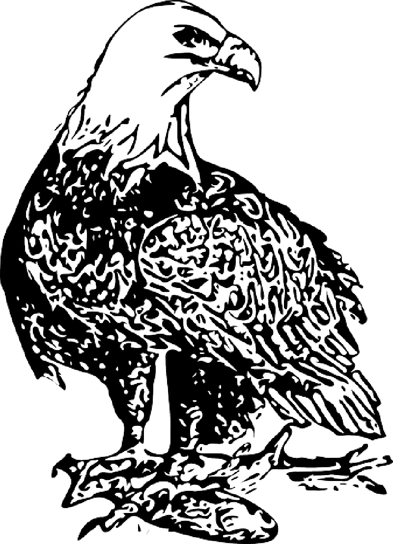 Eagle clipart wedge tailed eagle. Philippine crazywidow info