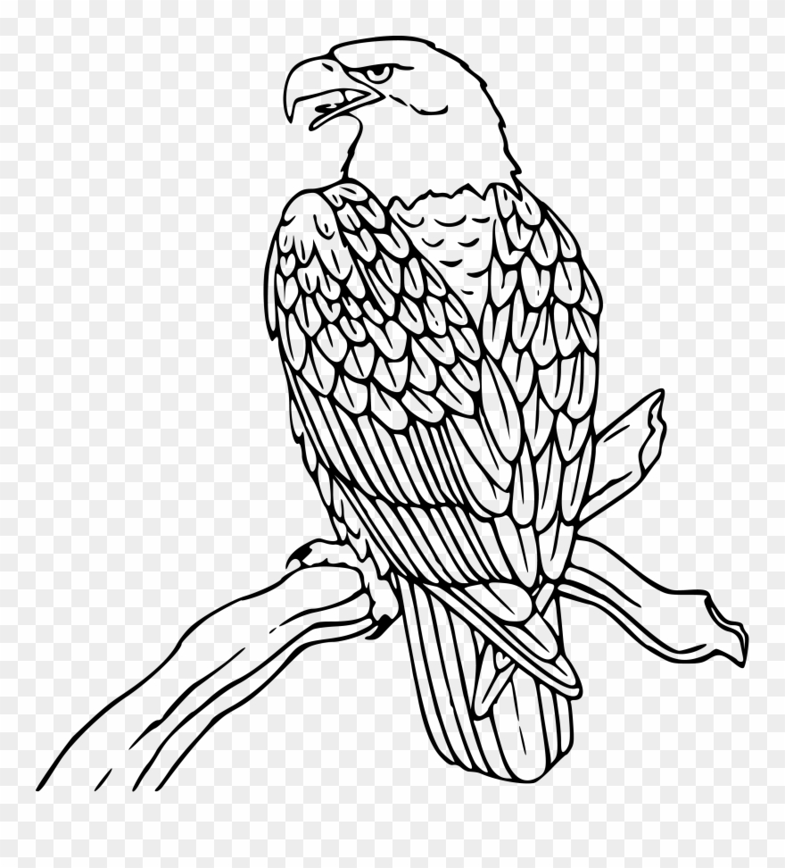 Eagles clipart black and white. Free download eagle clip