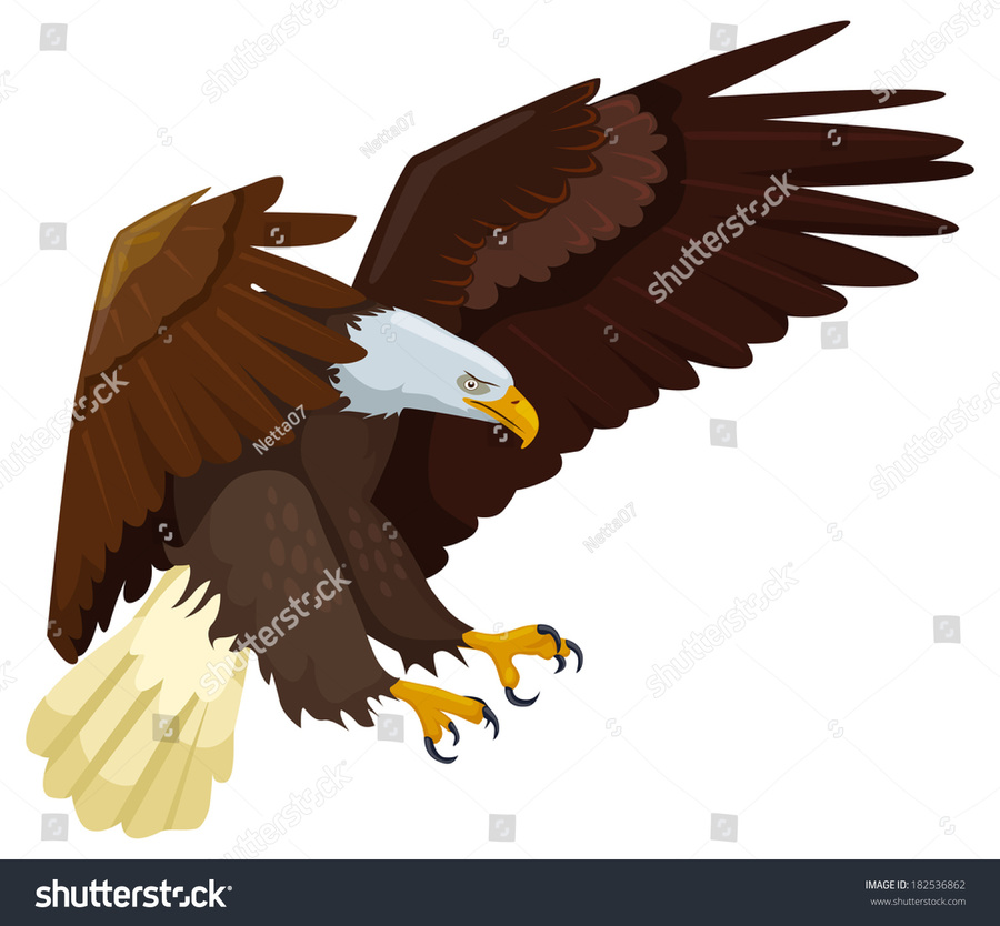 Eagles clipart bold eagle. Bird wing feather illustration