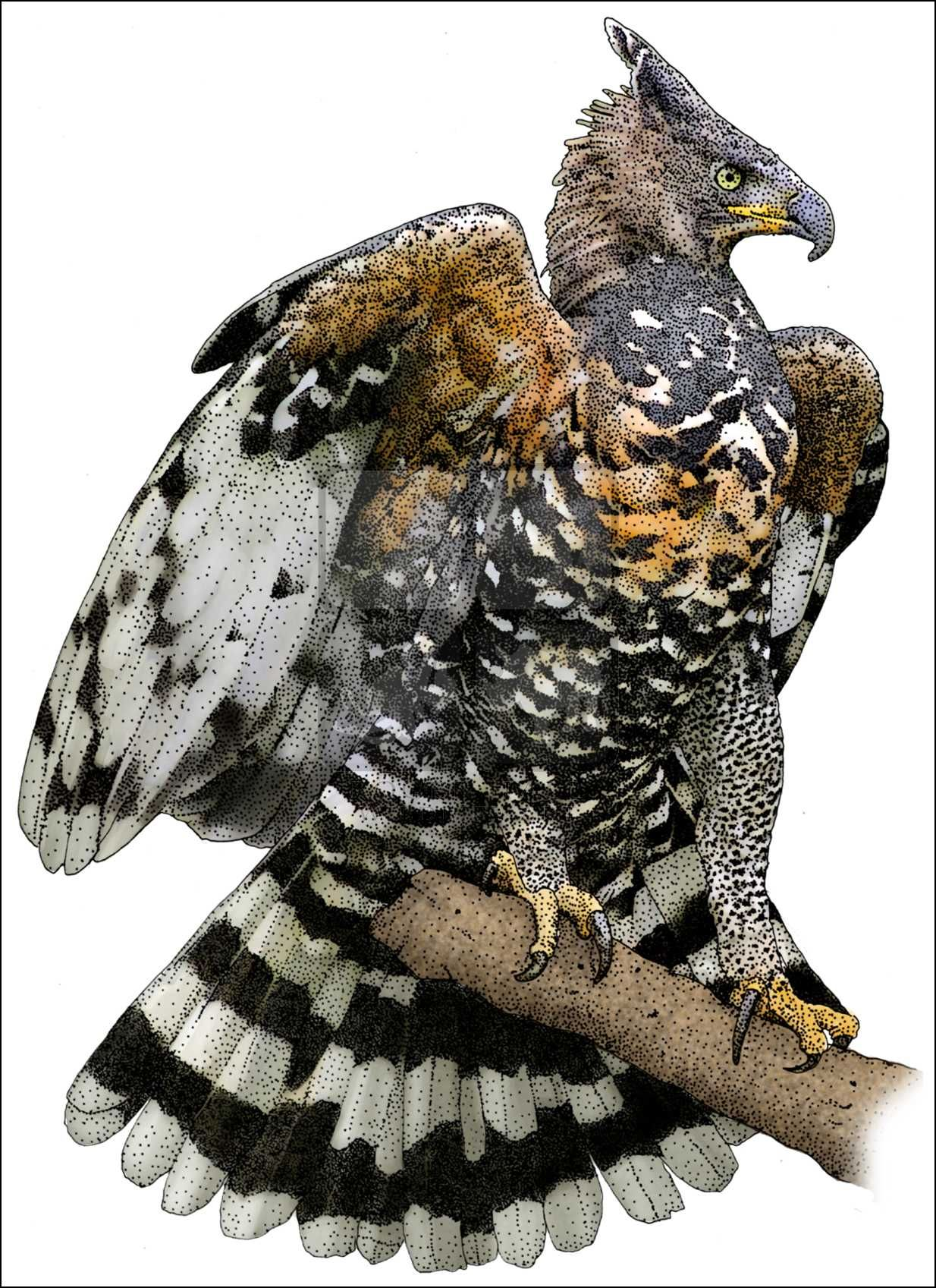 Eagles clipart crowned eagle. Pretty bird african birds