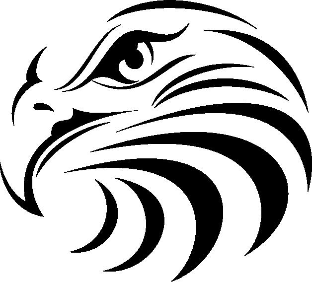 Eagles clipart eagle head. Bald manly warringah sea