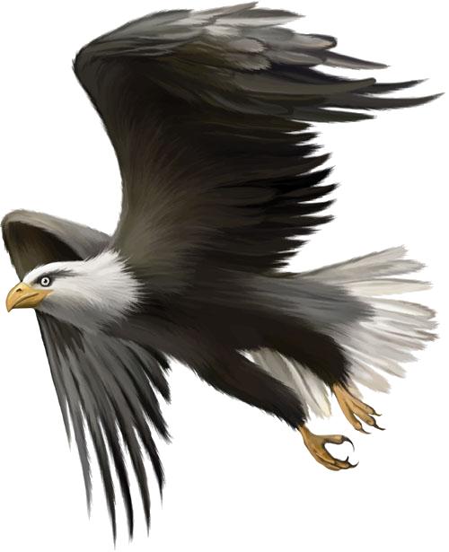 eagles clipart eagle indian