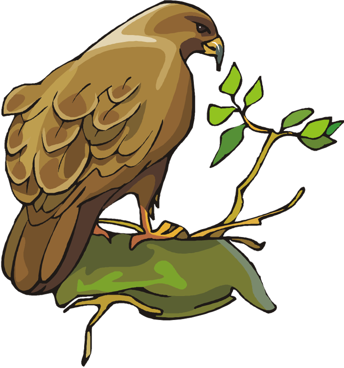 Free . Hawk clipart strong eagle