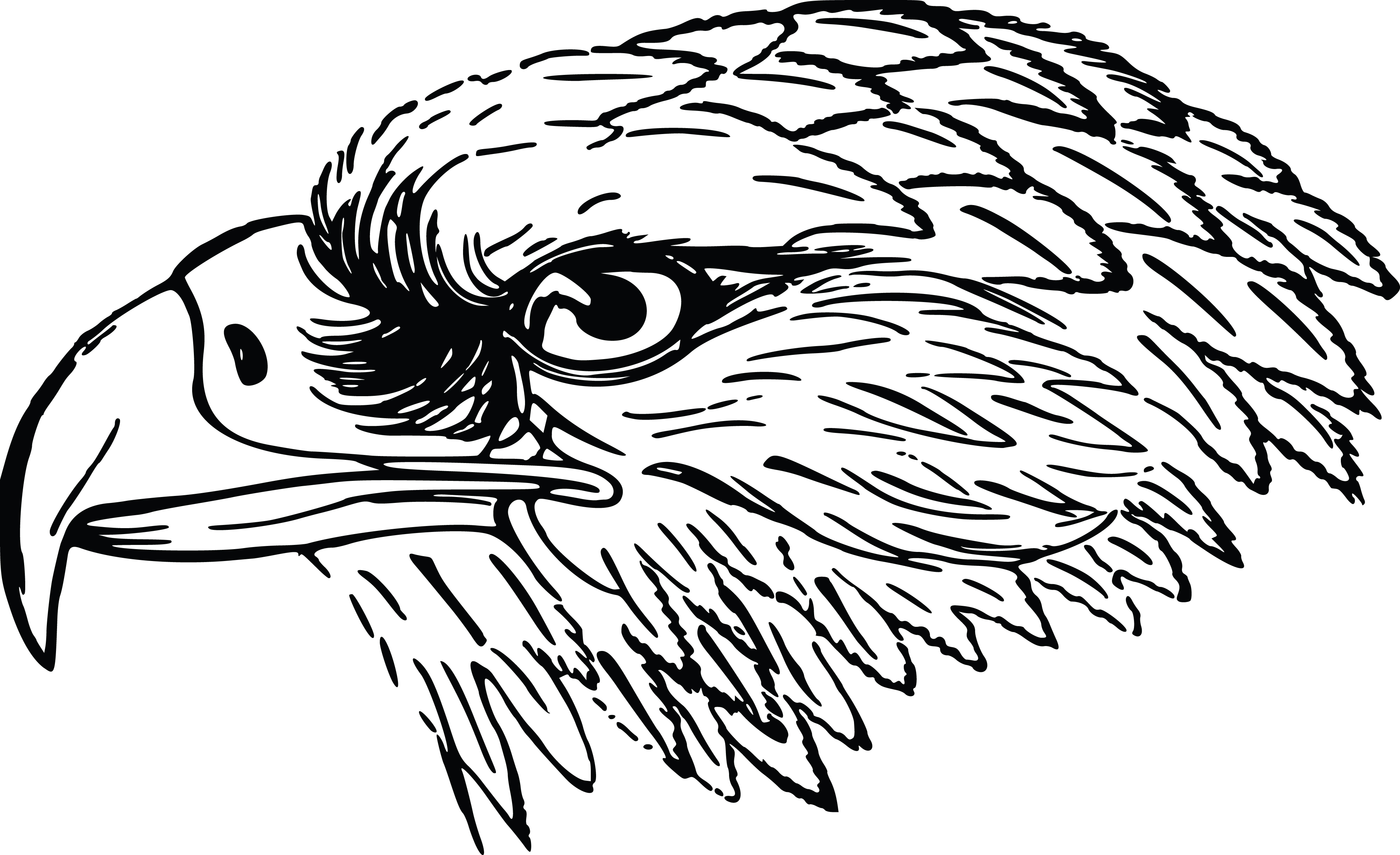 Falcon clipart eagle. Eagles pencil and in